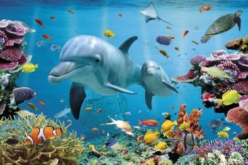 Inspire Destiny Dolphin Poetry